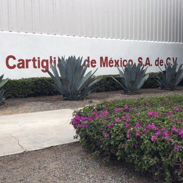 Immagini ingresso Cartigliano de Mexico